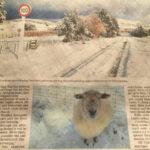 クライストチャーチでも雪が降りました〜!冬ですね〜