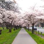 南半球では季節が日本と逆なのを知っていましたか?