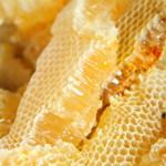 ハチミツ・ローヤルゼリー・プロポリスの効能!蜂が作り出す凄い物質