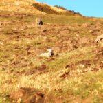 羊さんたちの繁殖期で赤ちゃんたちがたくさんいます♪9月は赤ちゃん羊!覚えておこう〜!